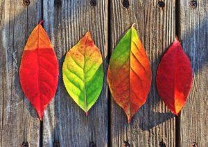 cadono-le-foglie